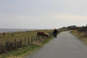 Při projížďce na kole s huculskými koni.