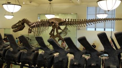 Přírodovědecké muzeum New York. Hrálo i v několika filmech.