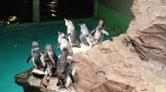 Bostonské Aquarium - tučnáci